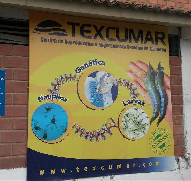 Texcumar shrimp grower社